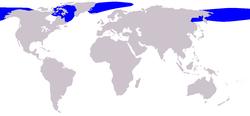 250px-Cetacea_range_map_Bowhead_Whale.png