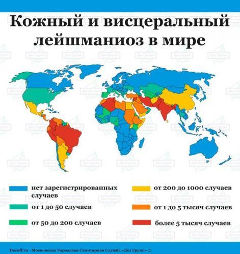 kognyy_visceralnyy_leyshmanioz.jpg