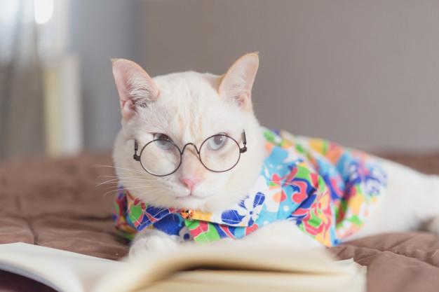 portrait-white-cat-wearing-glasses-reading-book_43525-951.jpg