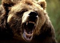 grizli.jpg
