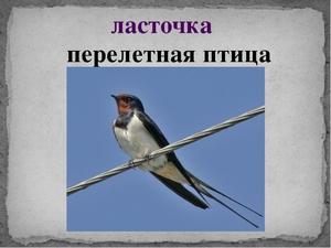 chem-pitaetsya-lastochka.jpg