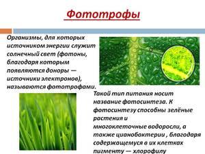 zhivye_organizmy_fototrofy.jpg
