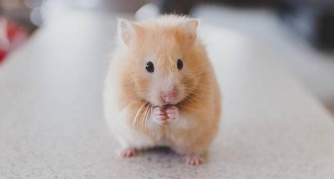 hamsterprosit-1.jpg