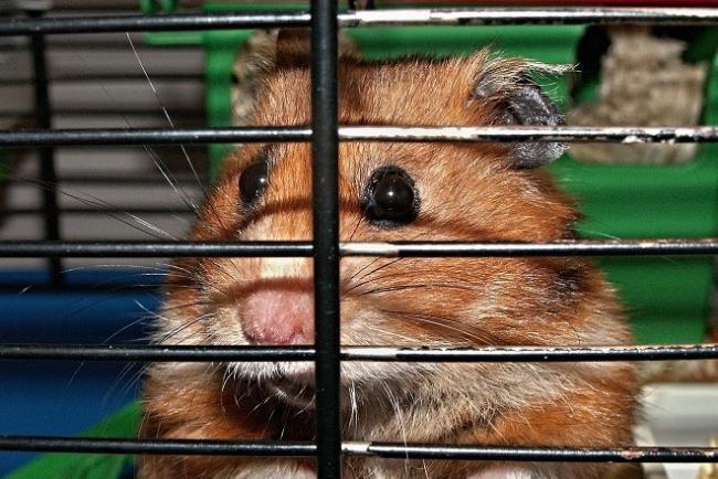 hamstervkletke-1.jpg