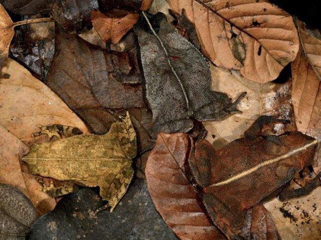 30 самых удивительных лягушек и жаб в мире (30 фото)