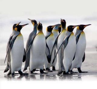 pingvinyi.jpg