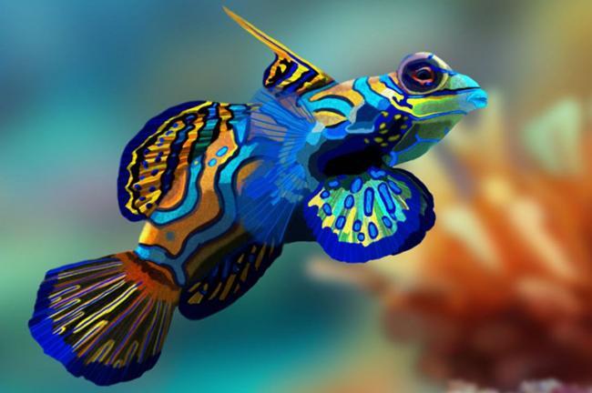 Great-Barrier-Reef-Mandarinfish_Pinterest_-pamelap.jpg