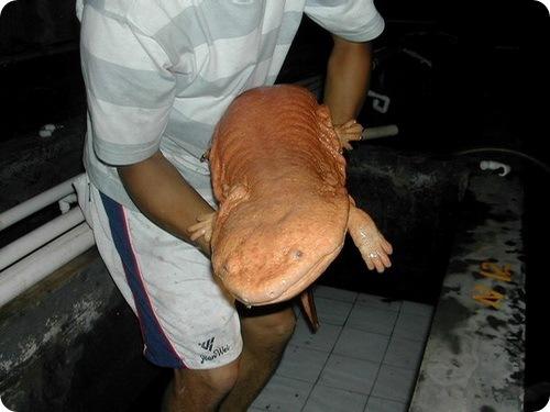salamande4.jpg