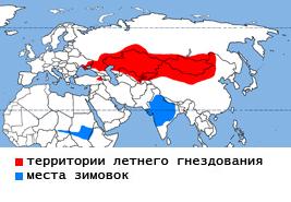 185-zhuravl_krasavka-2.jpg