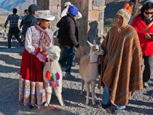 Лама и альпака-300x225.jpg