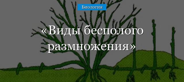 vidy-bespologo-razmnozheniya.jpg