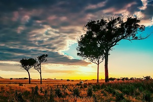 Nature___Desert_Trees_in_the_African_savanna_037247_.jpg