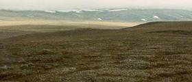 tundra_1.jpg