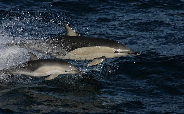 Kto-takie-delfinyi.jpg