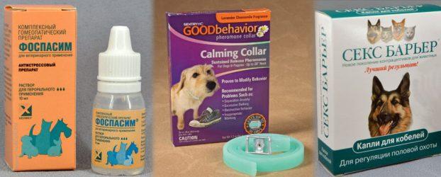 Успокоительные-препараты-для-собак-622x250.jpg