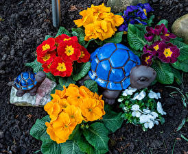 Turtles_Primula_Multicolor_584307_548x450.jpg