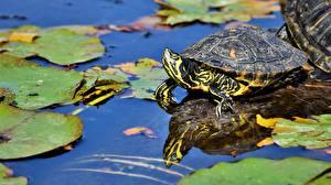 Turtles_Water_Pond_582030_600x337.jpg