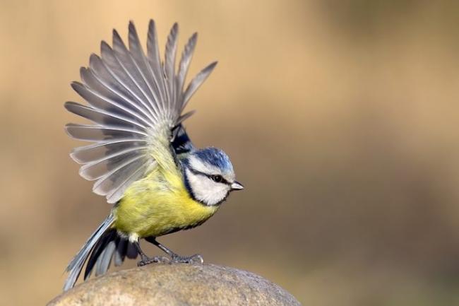 pereletnaya-li-ptica-sinica-e1499961548269.jpg