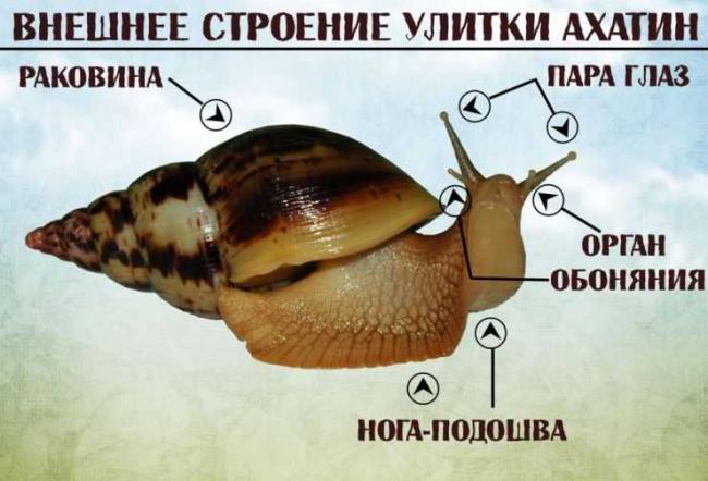 Ulitka-81.jpg