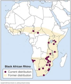 300px-Black_rhino_distribution.jpg