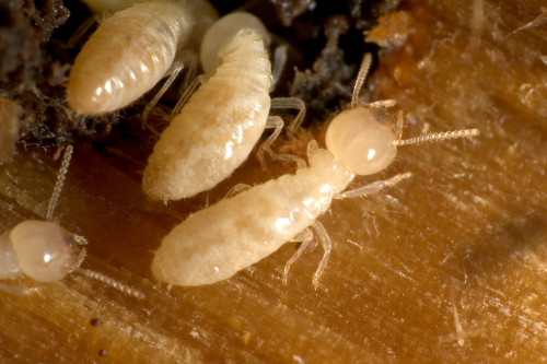 termity-1-e1472126633875.jpg