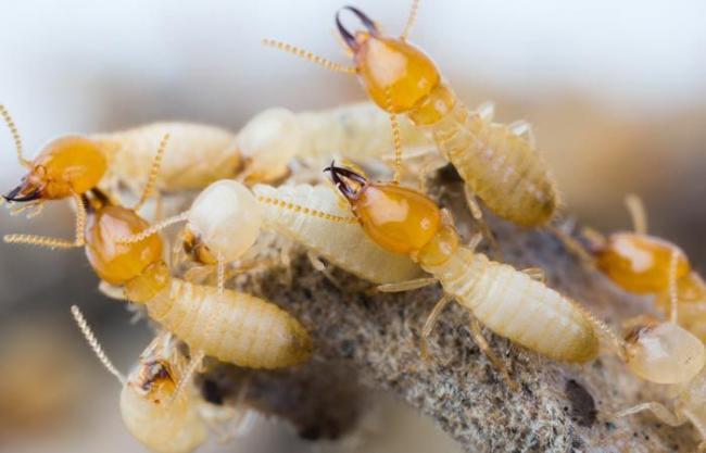 termity.jpg