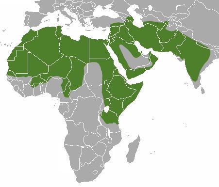 map-giena-polosatay.png