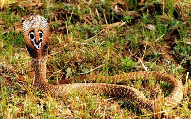 -змея-e1550599405335.jpg