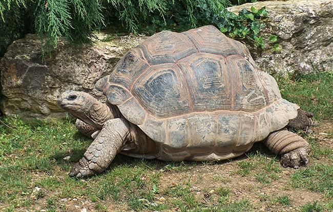 5Исполинская-сейшельская-черепаха.jpg