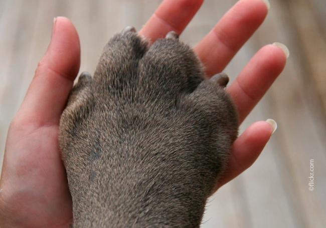 dog_paw1.jpg
