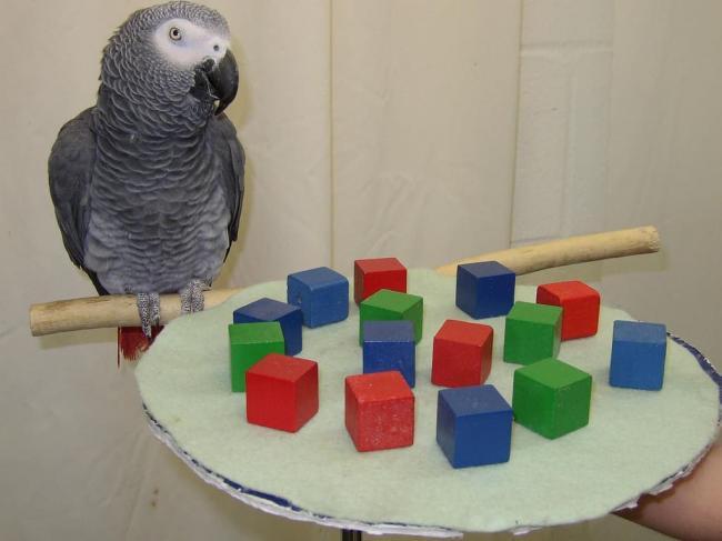 african-animals-photographs-of-cute-grey-parrot-bird-314072-1-1024x768.jpg