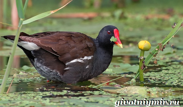 pticy-bolot-opisanie-nazvaniya-i-osobennosti-ptic-bolot.jpg