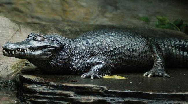 10 самых пугающих тварей из Амазонки (10 фото)