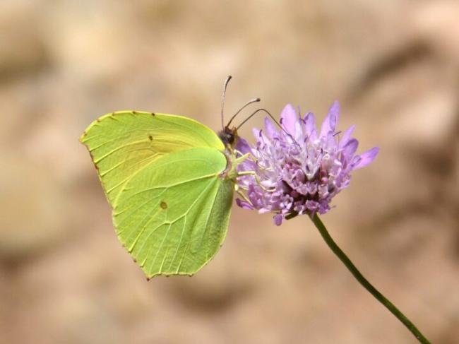 butterfly-5328151_12801.jpg