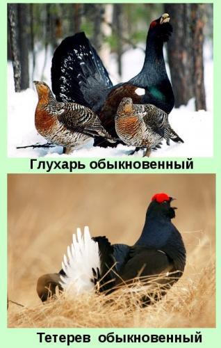 img14-e1575632859233.jpg