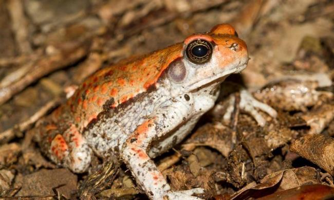 Чем-питается-африканская-красная-жаба-1024x614.jpg