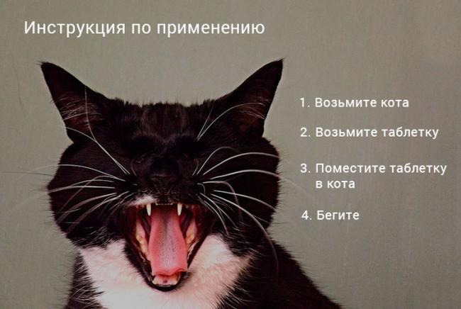 kak-pravilno-dat-tabletky-koty.jpg