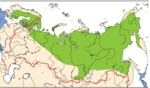 areal-gusennika-300x177.jpg