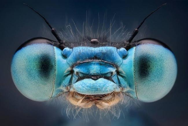 Глаза-стрекозы.jpg