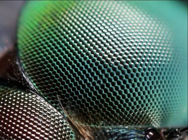 Структура-глаз-стрекозы.jpg