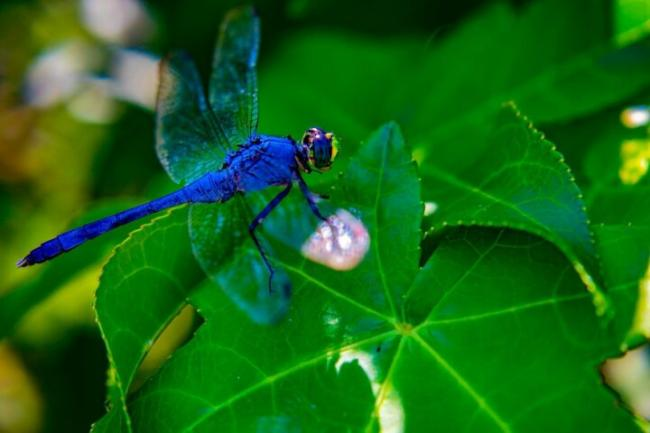dragonfly-3565172_12801.jpg