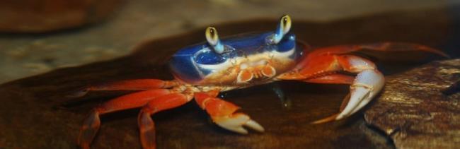 raduzhnii-crab03-860x280.jpg