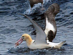 chem-pitaetsya-albatros-59e2261dcad7f-300x225.jpg