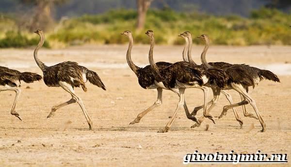 pticy-afriki-opisaniya-nazvaniya-i-osobennosti-ptic-afriki-2.jpg