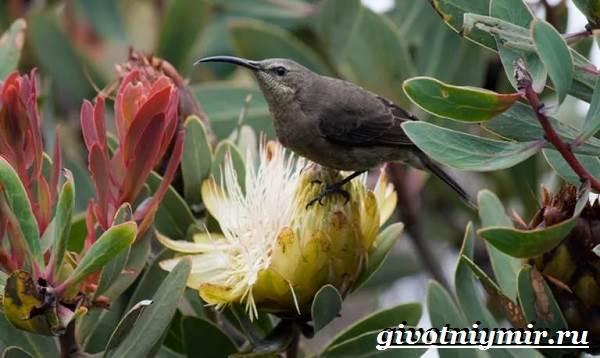 pticy-afriki-opisaniya-nazvaniya-i-osobennosti-ptic-afriki-1.jpg