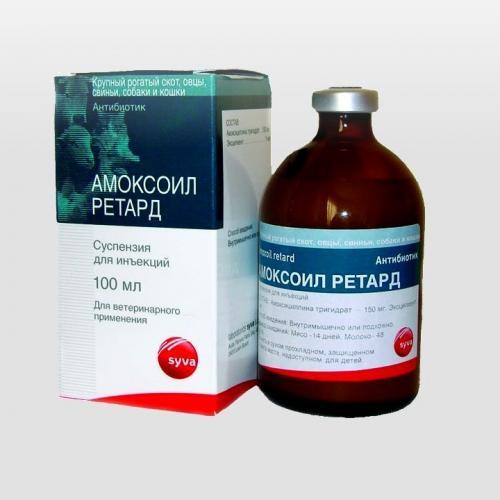 Antibiotiki-dlya-sobak-9.jpg
