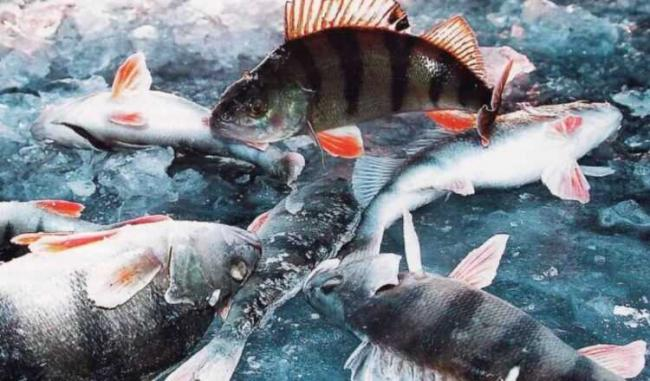 ryby-bajkala.jpg
