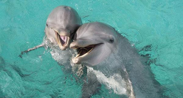 дельфины-600x322.jpg