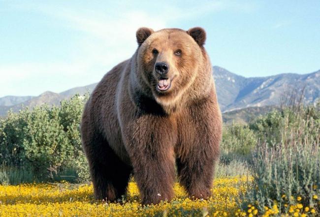 malaja-panda-jeto-enot-ili-medved-sweetpanda.ru-001-1024x694.jpg