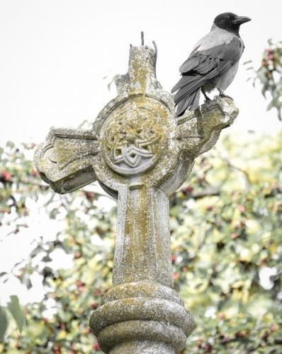 Ворон сидит на могильном кресте